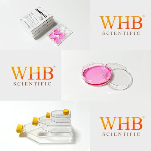 蛋白预包被器皿