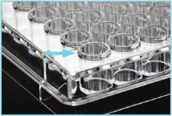 细胞培养板孔缘